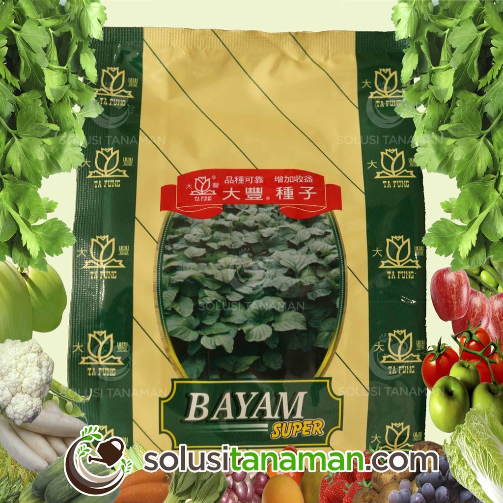 25 Benih Kubis kol (Savoy) January King 3 F1 Mr Fothergills Bibit tanaman sayur sayuran Hidroponik | Shopee Indonesia