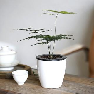 pot bunga / tanaman dengan model otomatis dan bergaya