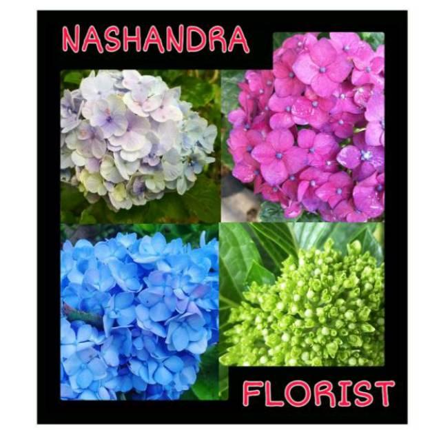 Tanaman Hias Bunga Panca Warna Hortensia Hydragea Shopee Indonesia