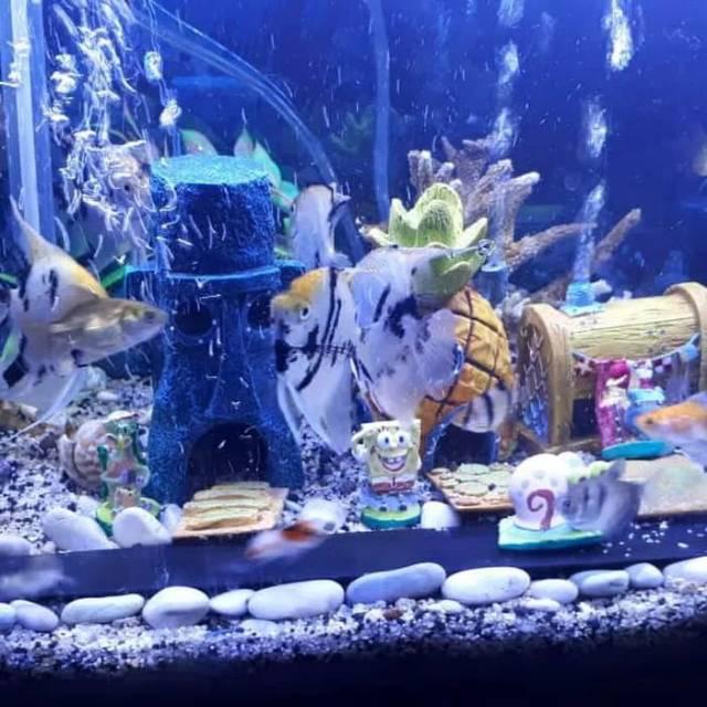 Aksesoris Aquarium Spongebob Terlaris Shopee Indonesia