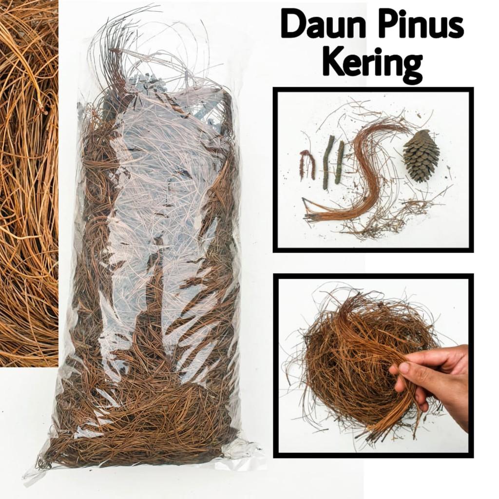 Daun Pinus Kering Sarang Burung / Humus Media Tanam / Bahan Kerajinan