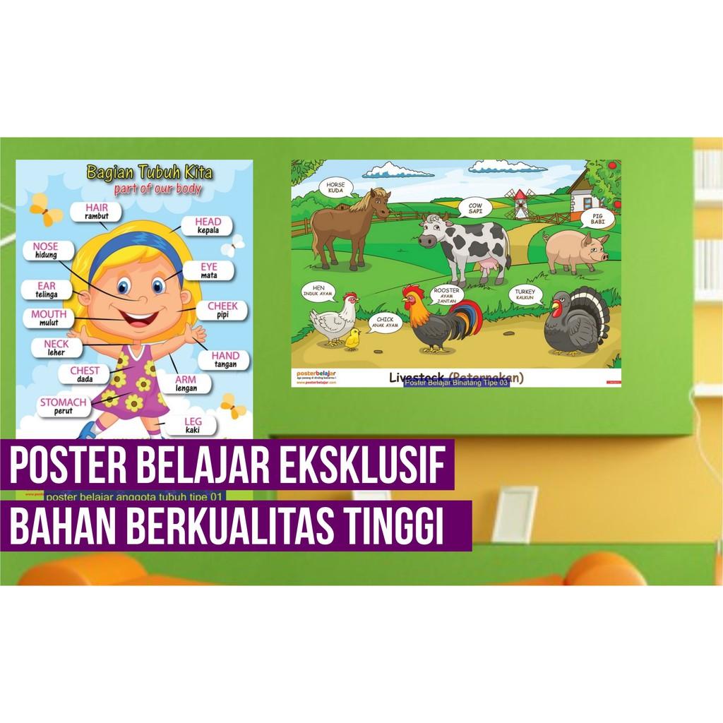 Tipe 06 Poster Pendidikan Belajar Mengenal Nama Anggota Tubuh Manusia Shopee Indonesia