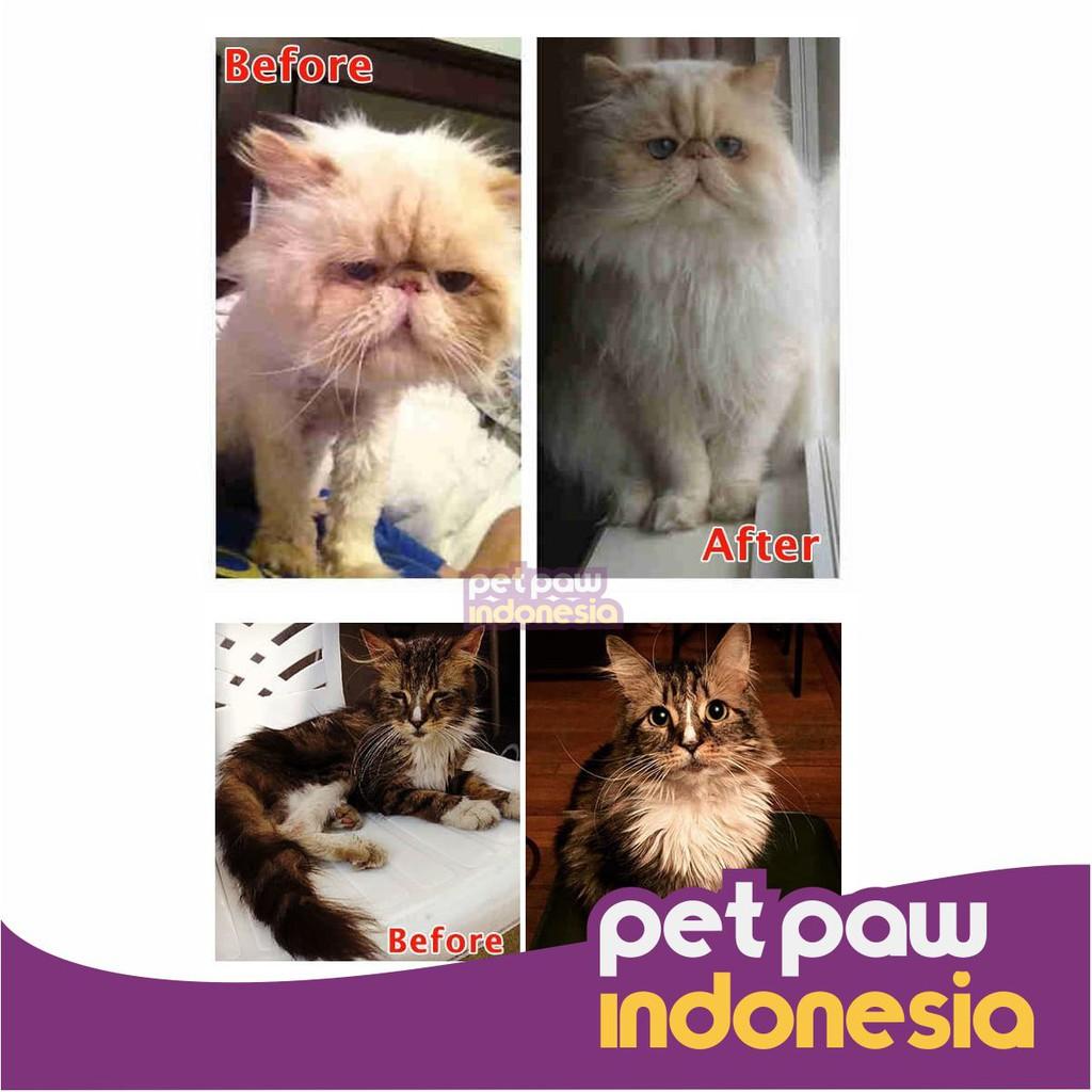 Shampo Hewan Kucing Anjing / Cat Dog Pet Shampoo Import-2