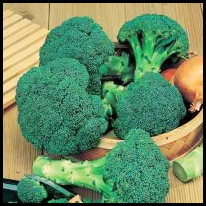 Kualitas Terbaik 50 Benih Brokoli Hijau Grifin F1 Hybrida Bibit Tanaman Sayuran Griffin Shopee Indonesia