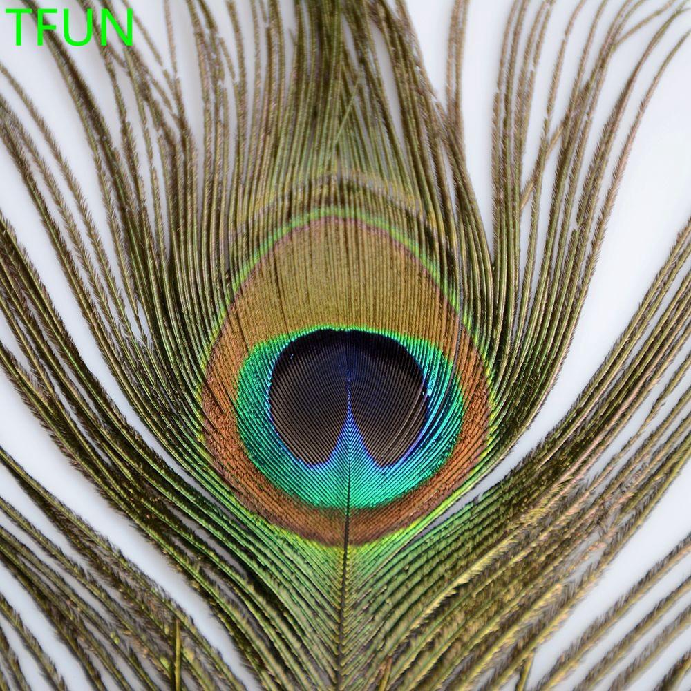 99 Foto Gambar Burung Merak Cantik HD