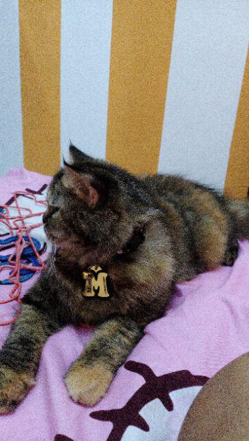 Katalog Kalung Nama Custom Anjing Dan Kucing Inisial Huruf A Z Shopee Indonesia