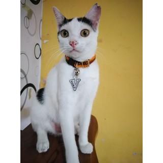 K13 Kalung Custom Nama Kucing Anjing Free Lonceng Inisial Huruf Pu Leather Kulit Sintetis Shopee Indonesia