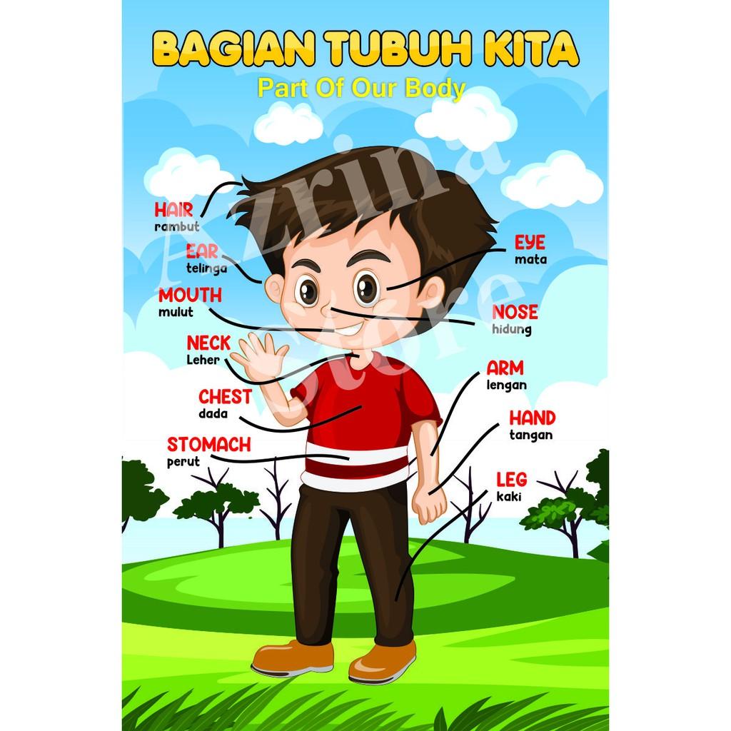 Big Size Poster Edukasi Anak Tk Paud Mengenal Anggota Tubuh Kita Shopee Indonesia