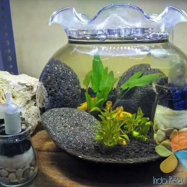 Aquarium Bulat Mini Shopee Indonesia
