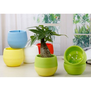 pot mini vas bunga bulat taman plastik tanaman hias kaktus