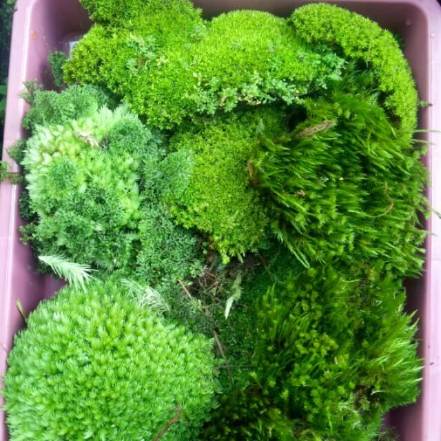 Moss Darat Shopee Indonesia