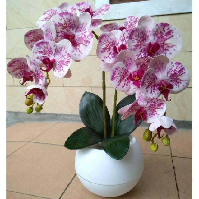 Bunga Anggrek Pink Garis Shopee Indonesia