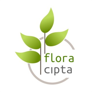 Price Checker Bibit bunga kitolod kitolo obat herbal discount - only Rp21.112