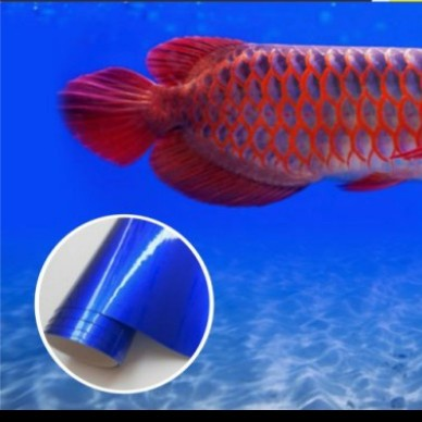 stiker aquarium/ stiker background aquarium/skotlet akuarium - biru glossy