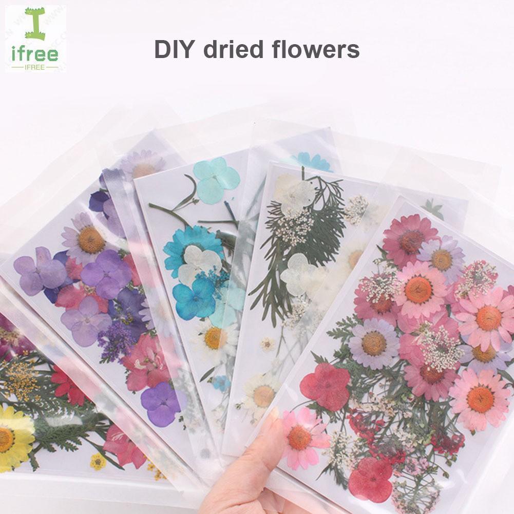 Mixed Red Pressed Dried Flowers Herbarium DIY Arts Crafts Scrapbooking Decor