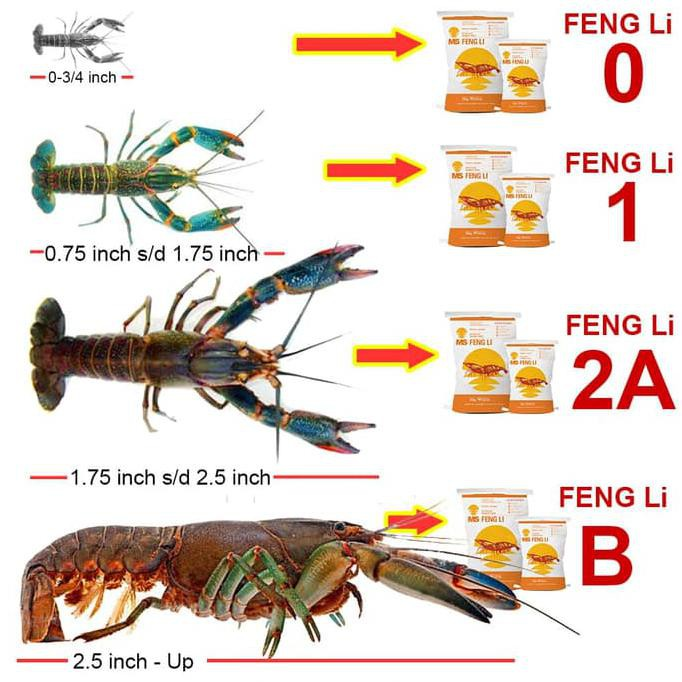 Pakan Bibit Udang Lobster Pelet Tenggelam Fengli Std Fl 1 Kemasan