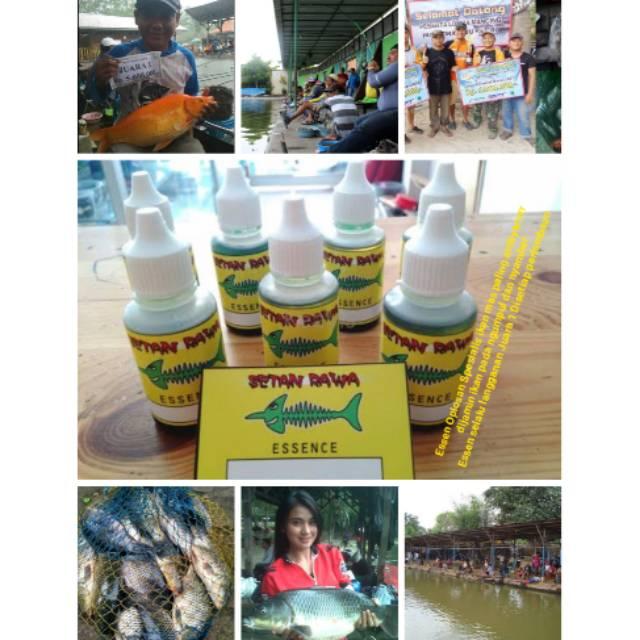 Promo Obat Tetes Essen Ikan Mas Segala Cuaca Dan Air Esen Juara Loma Kolam Galatama Kilo Gebrus Shopee Indonesia