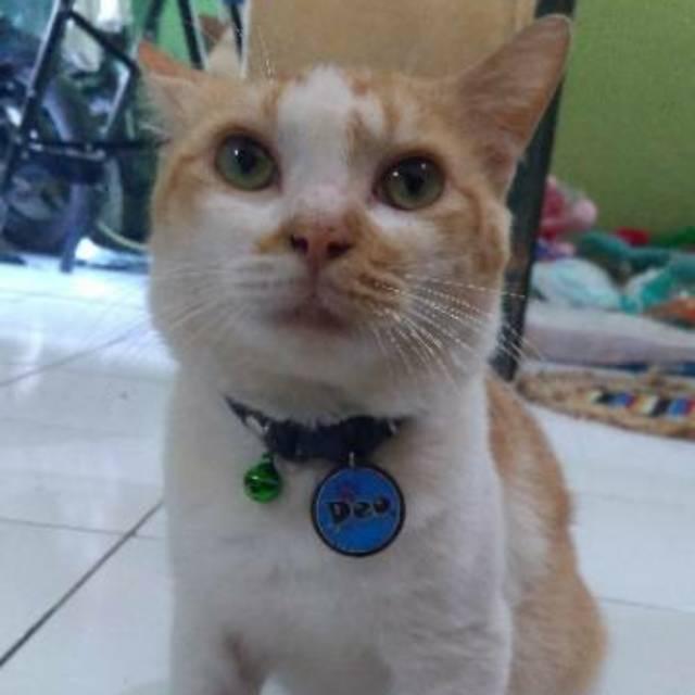 Kalung Nama Kucing Pettag Double Acrylik Shopee Indonesia