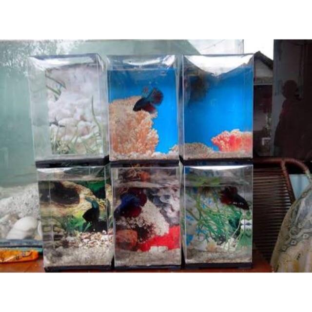 Paket Hemat Aquarium Ikan Cupang