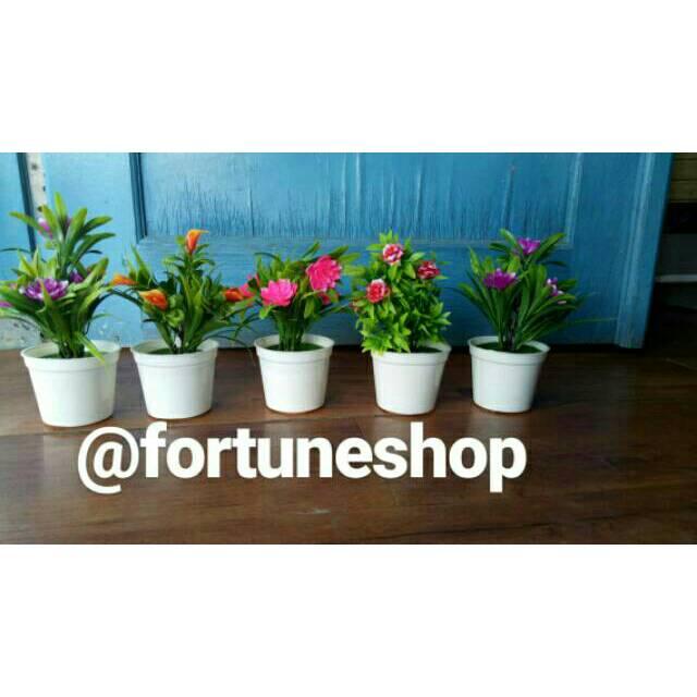 Promo Bunga Dalam Pot Murah Tanaman Hias Bunga Hias Pot Tanaman Shopee Indonesia