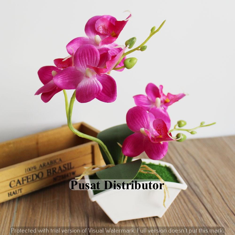 Unduh 400+ Wallpaper Bunga Anggrek Hitam Terbaik