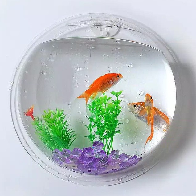 Aquarium Gantung Tempel Dinding Hanging Ikan Cupang Tanaman Hias Shopee Indonesia
