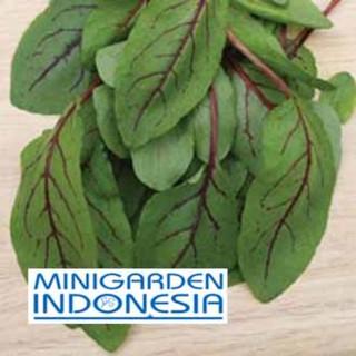 obat sayur sayuran herb fothergills. Source · 6 benih SORREL Red Veined .