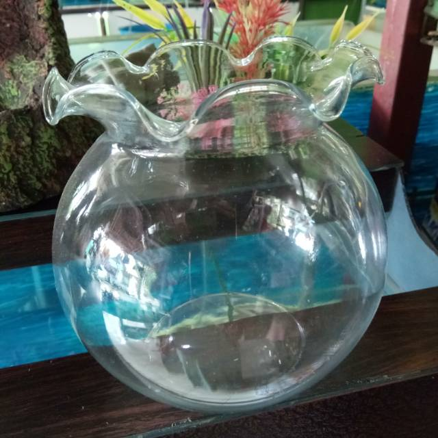 Aquarium Bulat Small Aquarium Kaca Bulat Shopee Indonesia
