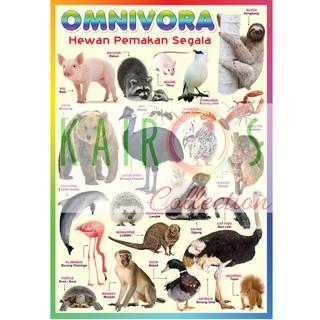 750 Koleksi Kumpulan Gambar Hewan Omnivora HD Terbaik