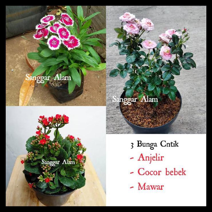 Paket Bunga Cantik Tanaman Hias Bunga Shopee Indonesia