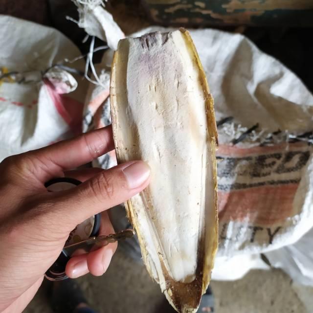 Tulang Sotong Cumi 1kg Shopee Indonesia