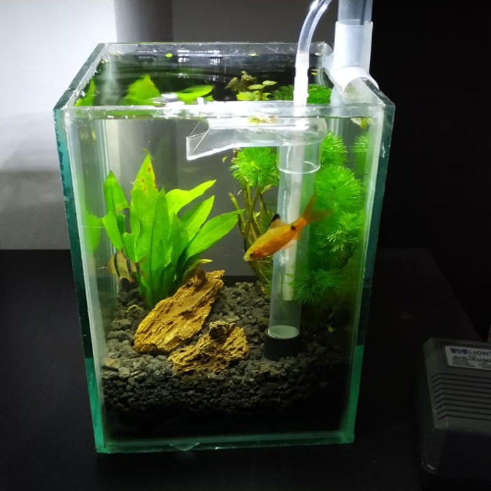 Paket Nano Aquascape Shopee Indonesia