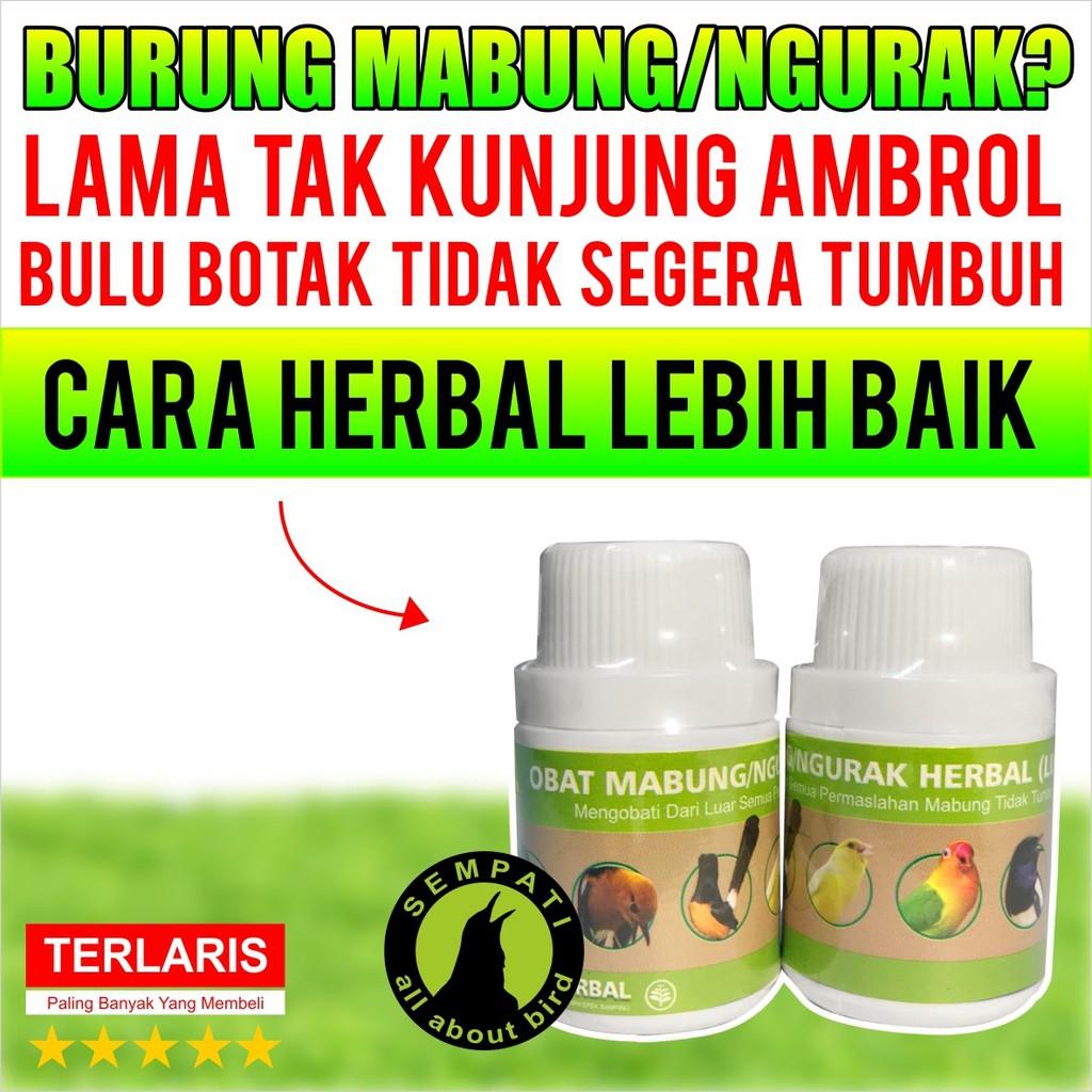 Obat Mabung Ngurak Herbal Luar Sempati Obat Burung Sakit Mabung Tidak Tuntas Untuk Murai Kacer Anis Shopee Indonesia