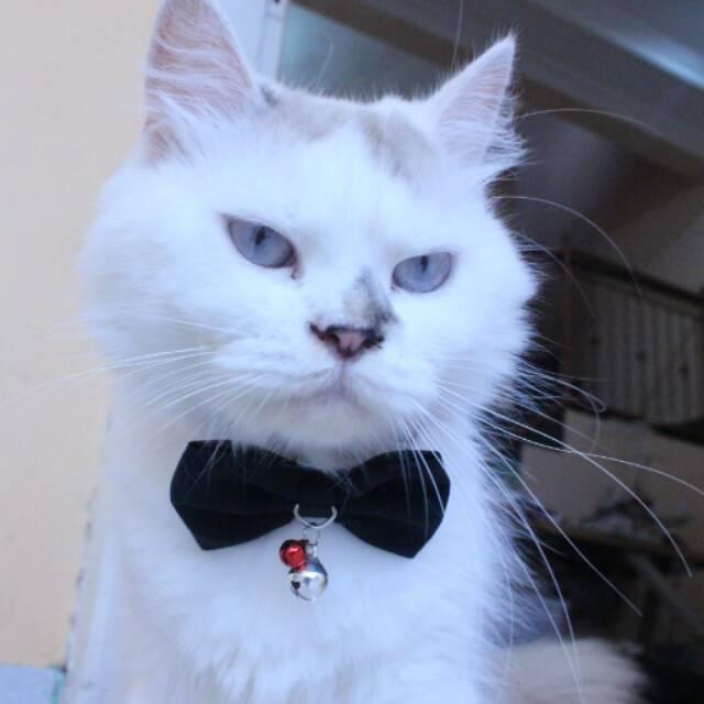 Dasi Hewan Lucu Dasi Kucing Imut Aksesoris Kucing Black Bowtie Size Adult Kitten Shopee Indonesia