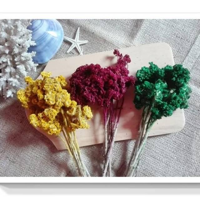 Bunga Edelweis Warna Warni