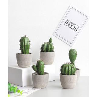 kaktus mini plastik dekorasi lamaran pernikahan rumah