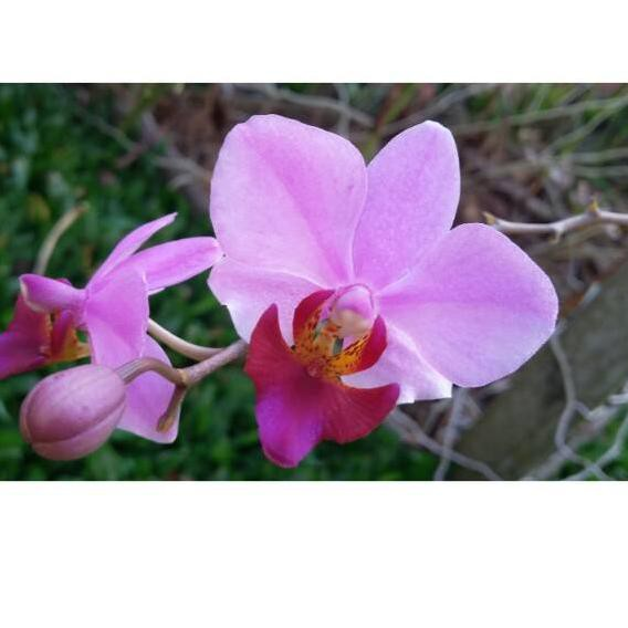 Unduh 91 Gambar Bunga Anggrek Pensil Gratis Terbaru