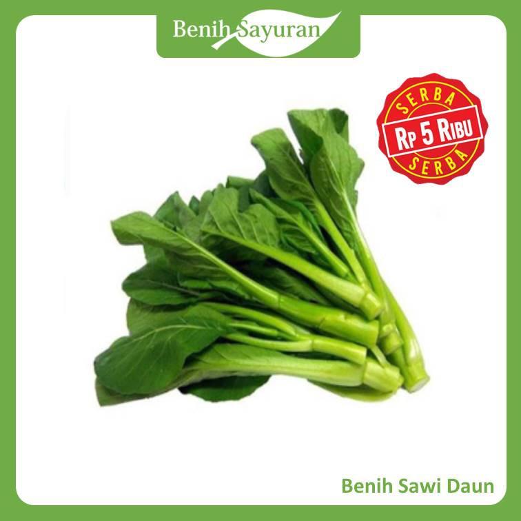 Benih Bibit Sayuran Sawi Daun Caisim Serba Lima Ribu Shopee Indonesia