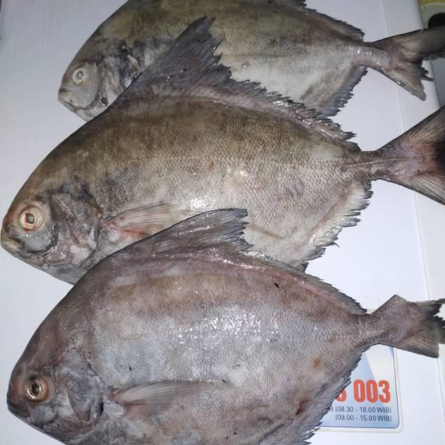 Ikan Bawal Hitam Besar Bawal Laut 1000 Gram Shopee Indonesia
