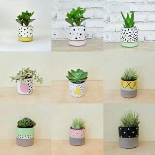 Pot Kaktus Mini Lucu Floral Free Kaktus