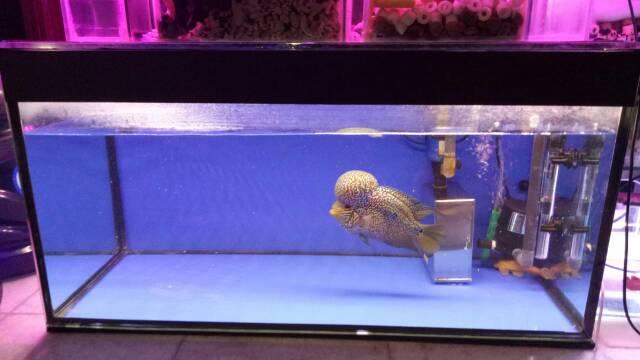 Filter Aquarium Tanpa Kuras Uk Kecil