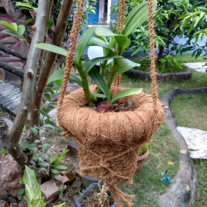 Murah Pot Gantung Pot Serabut Kelapa Sabut Kelapa Pot Anggrek