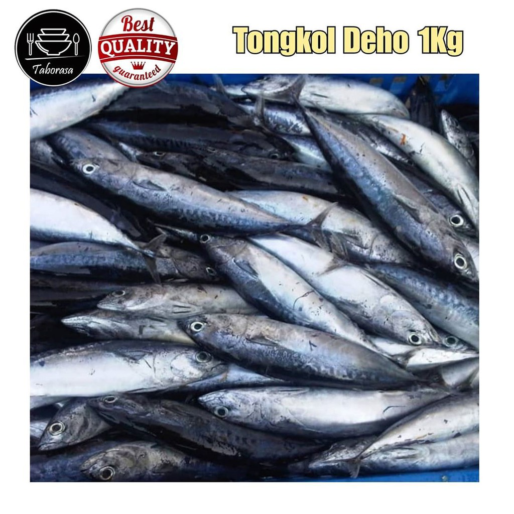 Ikan Tongkol Segar Ikan Deho Segar Ikan Segar Kiloan 4 7 Ekor Pack 1 Kg Shopee Indonesia