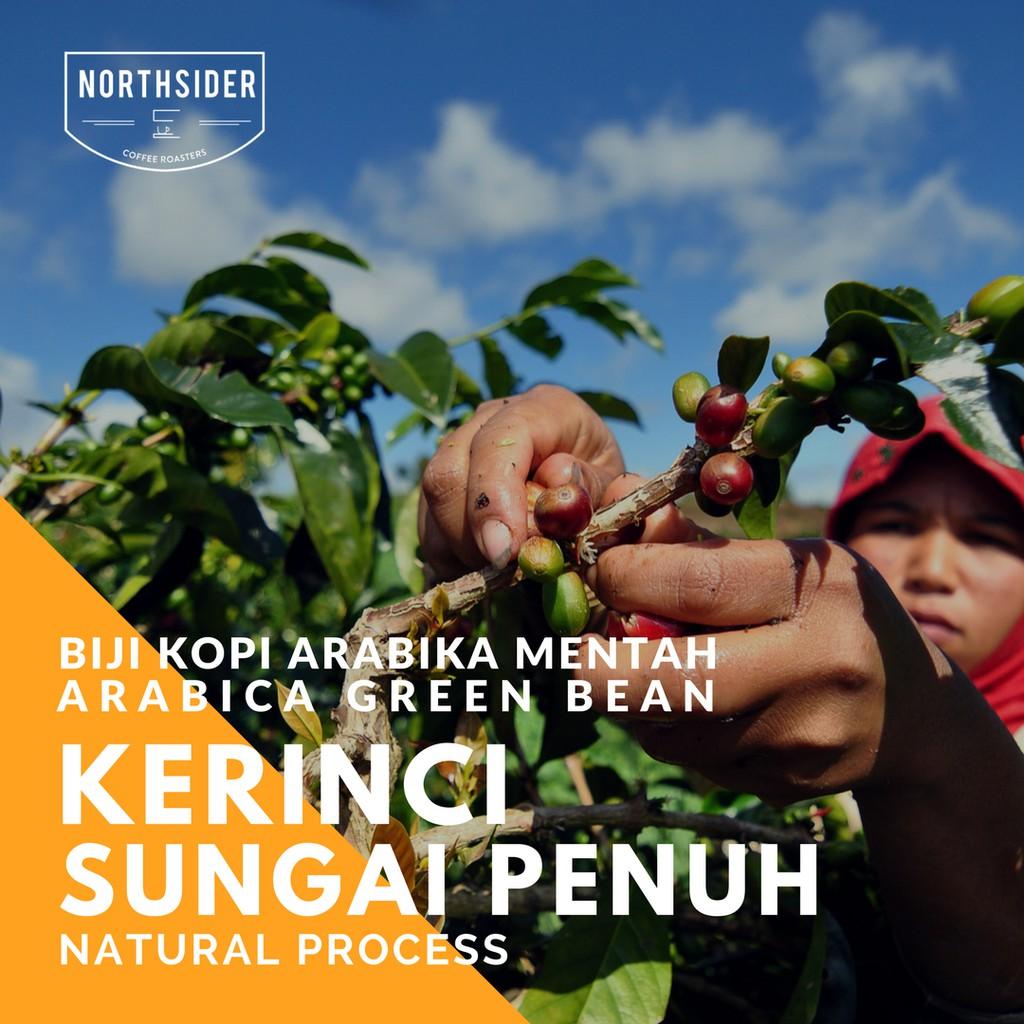 Biji Kopi Arabika Kerinci Volcano Natural Green Bean Northsider Specialty Coffee Otten Arabica Kayo Sungai Penuh Process 200g Bubuk Manual Brew Shopee Indonesia