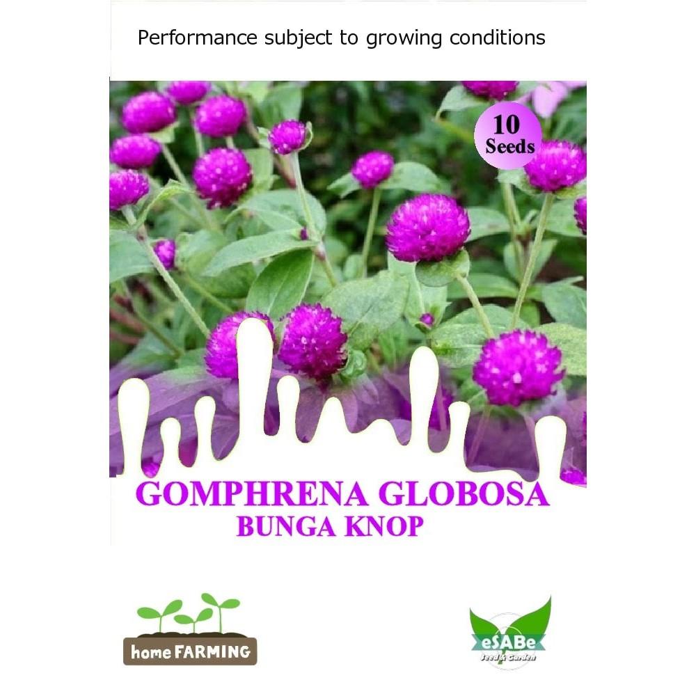 Paket Hemat Benih Bunga Matahari 4 Jenis Mudah Tumbuh Cocok Di Ipb Bm1 Tempat Panas Dan Dingin Shopee Indonesia