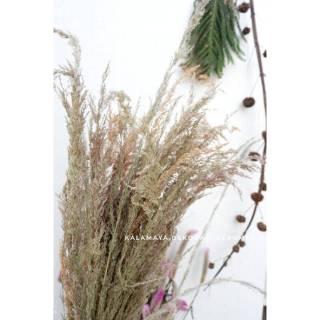 pampas ilalang bunga kering dekorasi rustic engagement