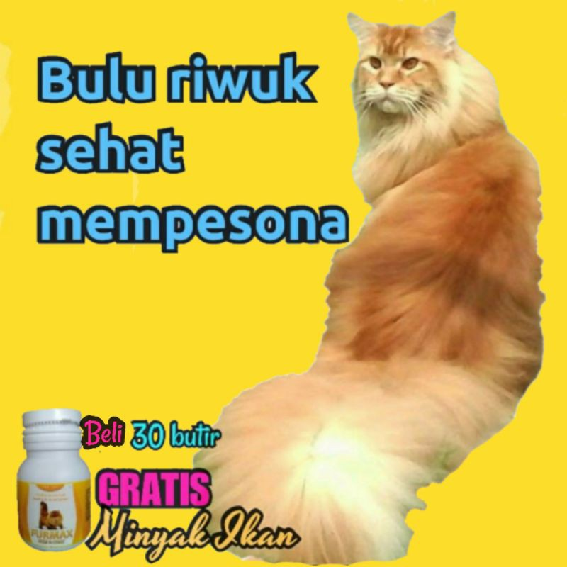 Terkini Minyak But But Untuk Kucing