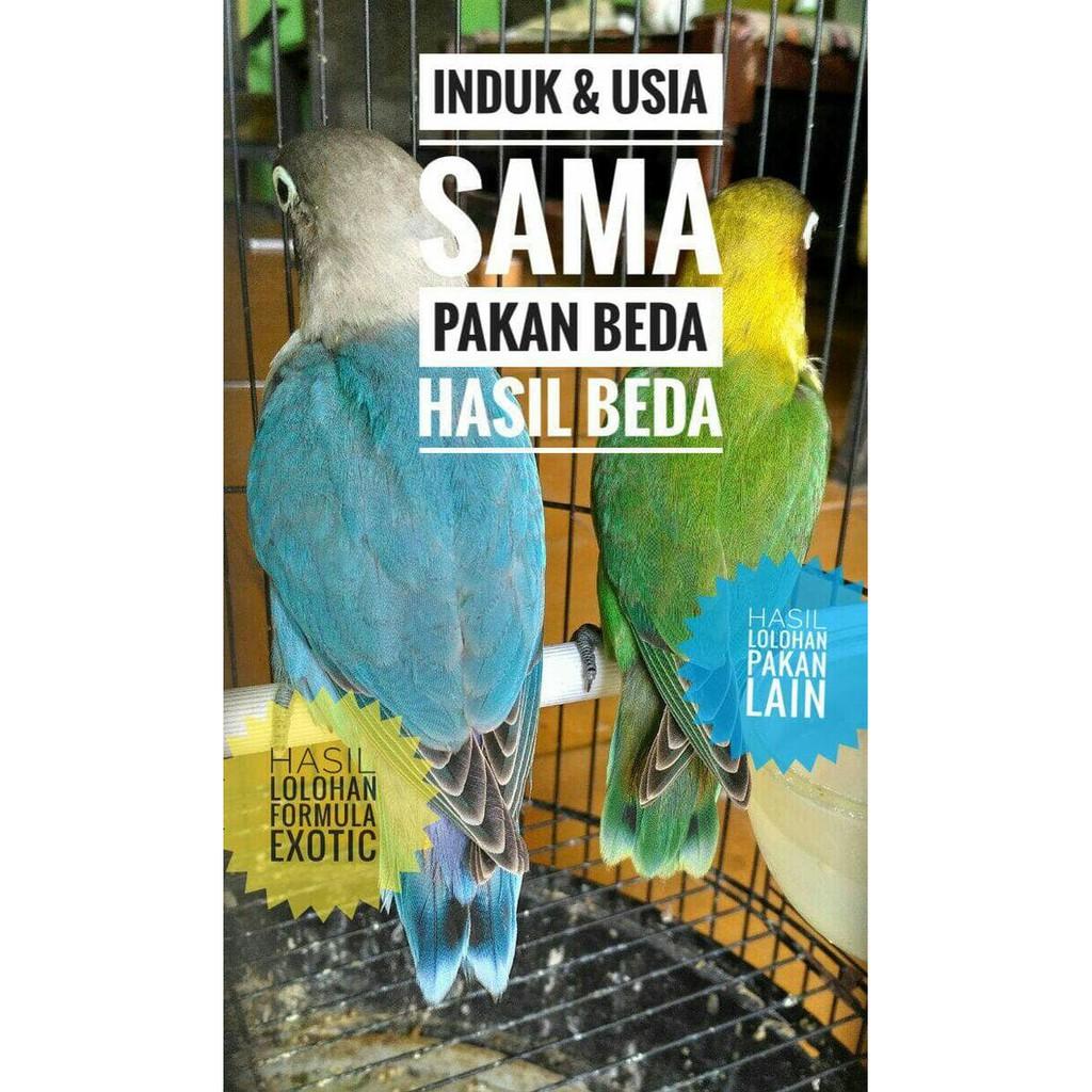 Formula Exotic Kemasan Kotak 400 Gr Pakan Bubur Burung Anakan Baby Box Wadah Untuk Lovebird Murai Kenari Kacer Dll Lolohan Spet Shopee Indonesia