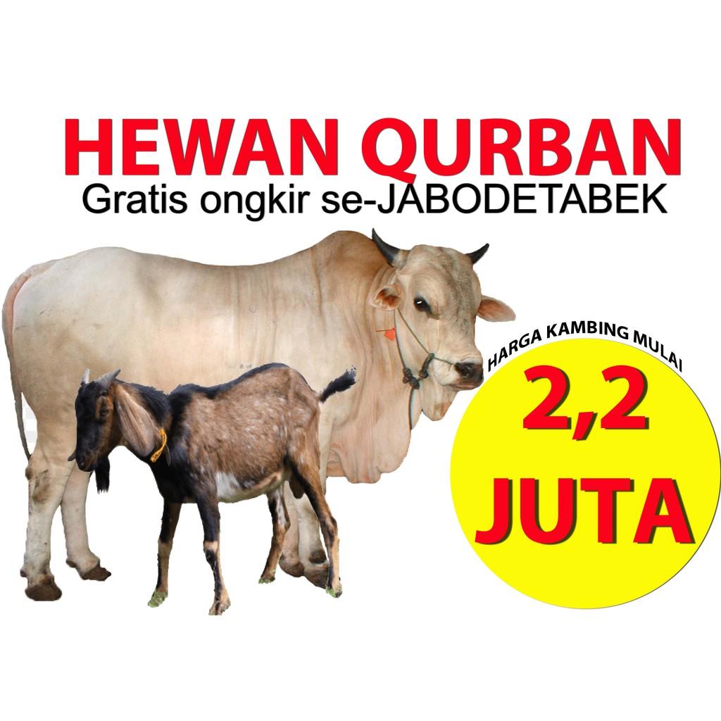 Hewan Qurban Qurban Sapi Qurban Kambing Qurban Murah Aqiqah Akikah Kurban Shopee Indonesia