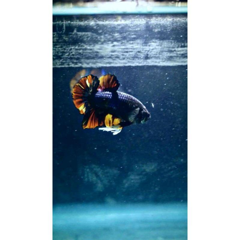 Avatar Nemo Size M